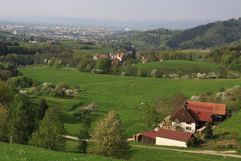 Blick_Freiburg